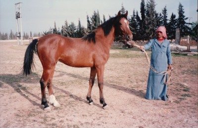 full brother of Ihsan Al Thani