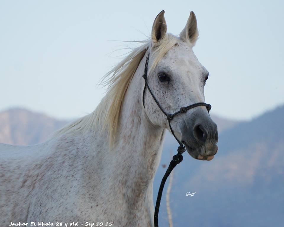 Wild Horse Running Fast The gallery for -->...