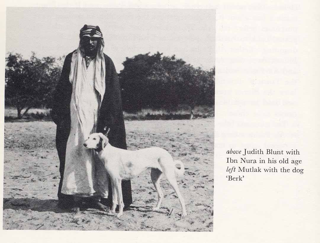 Daughters of the Wind: a blog on desert arabian horses, past